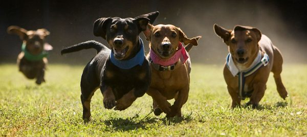 Doxies Racing