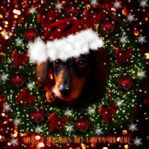 Christmas dachshund 2016