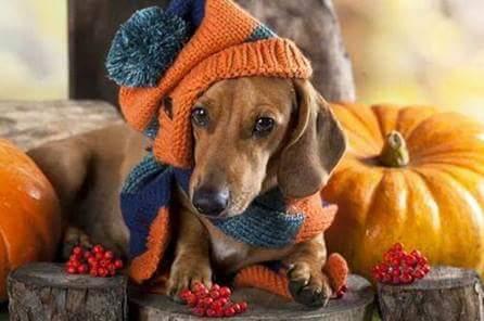 October Halloween Trunk or Treat stocking cap