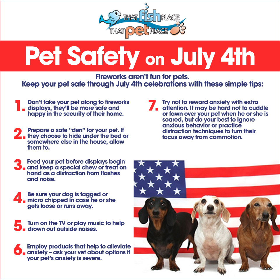 4th of July 3 dachshunds safety