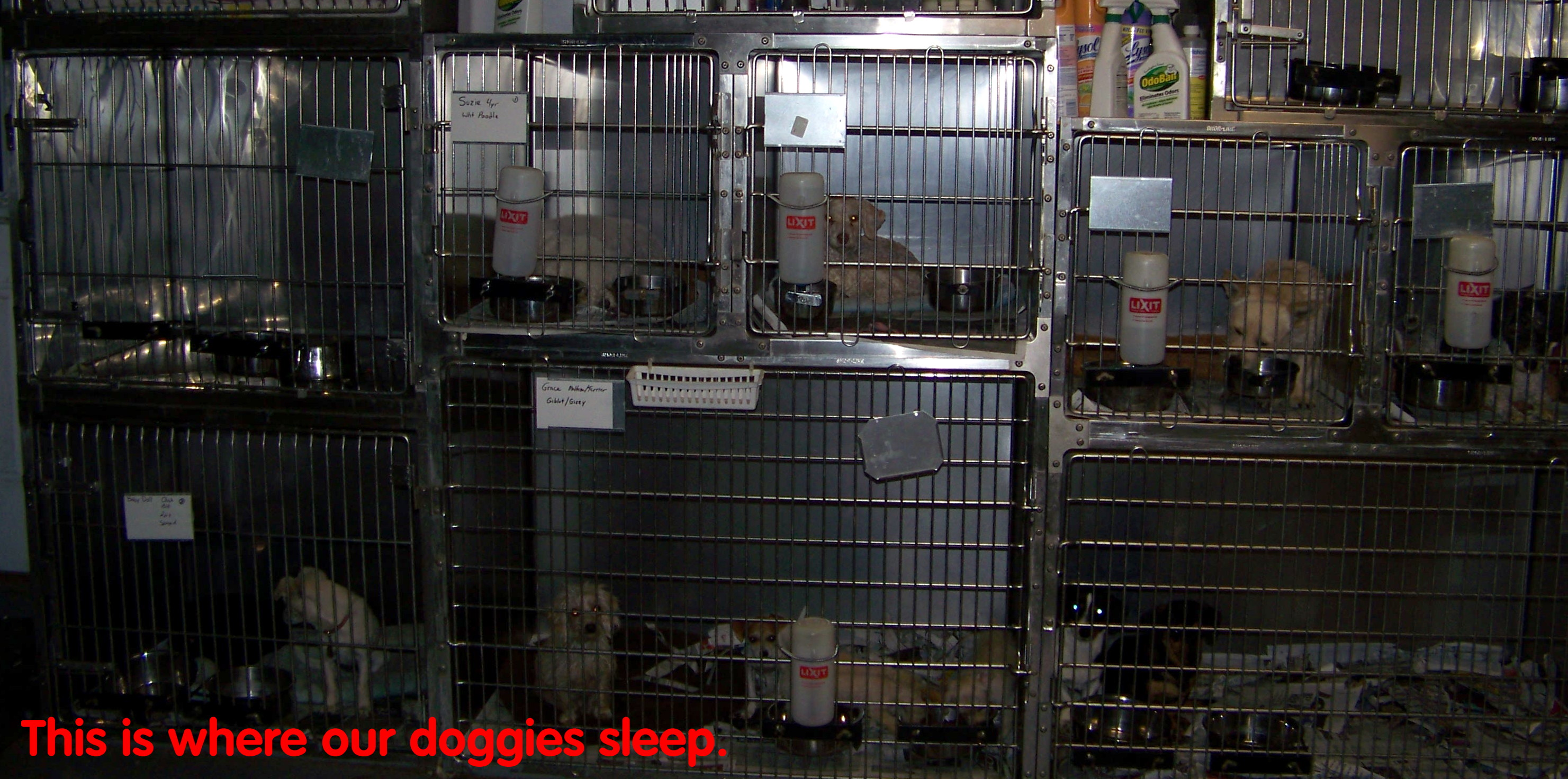 Sleeping Dogs1