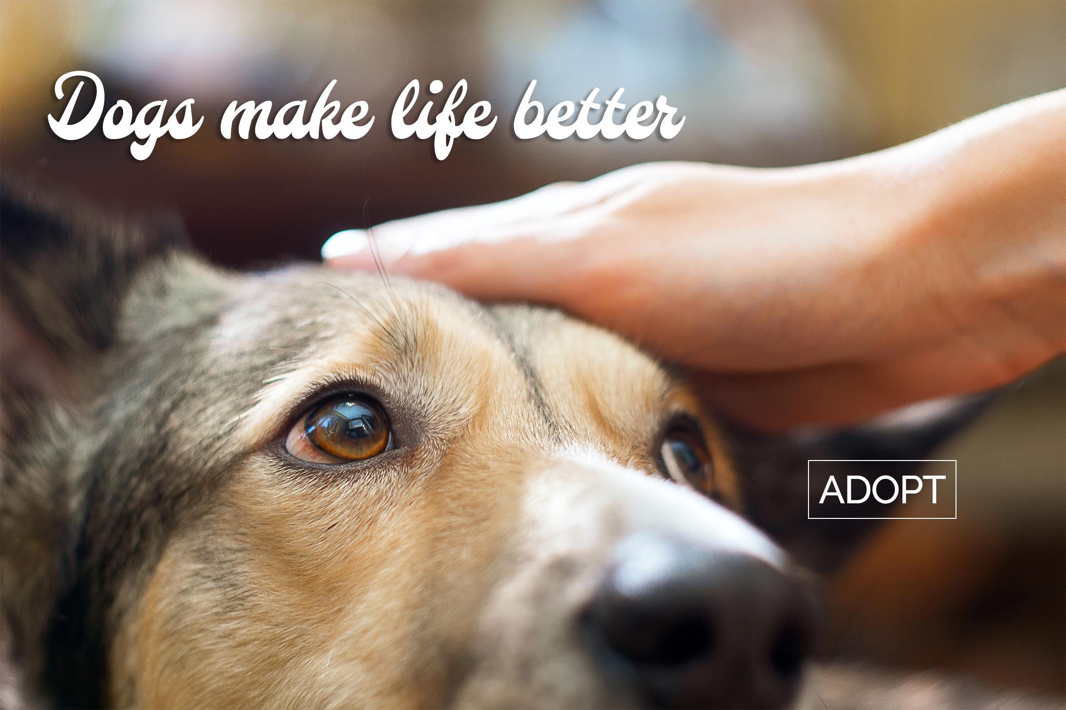 Dogs make life better - Adopt