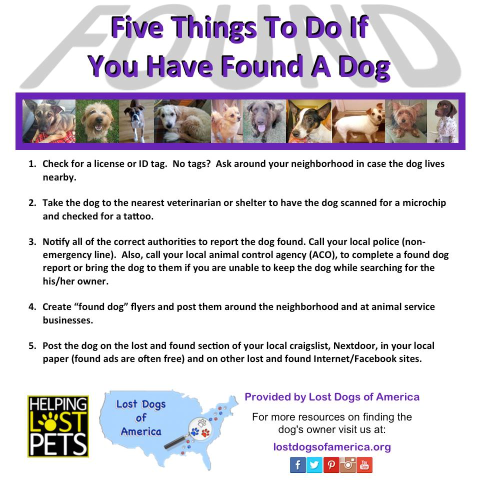 What To Do If You Found A Pet