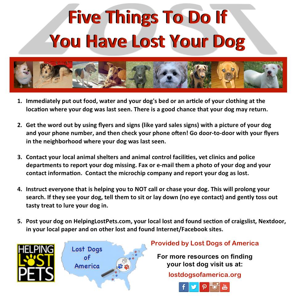 What to do if you lost your pet