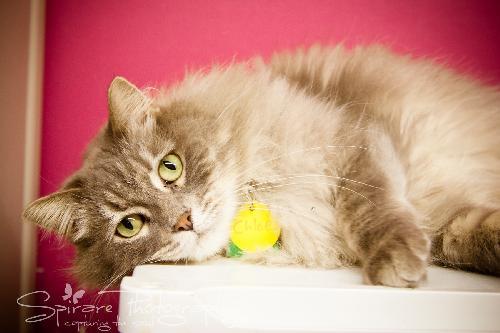 Chloecat