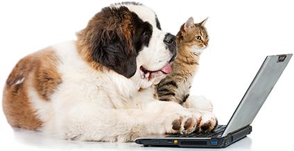 dog cat computer