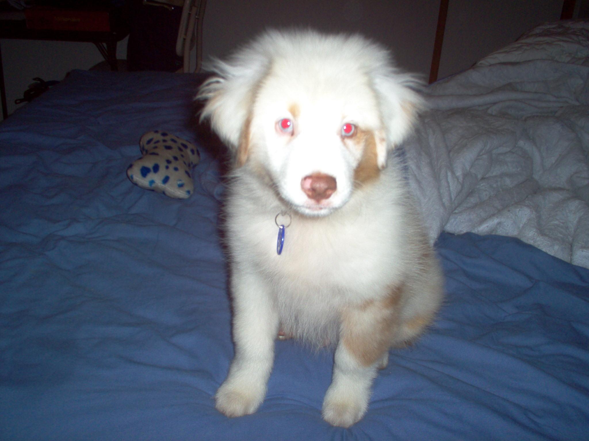 2008 Pet Stories 235-327