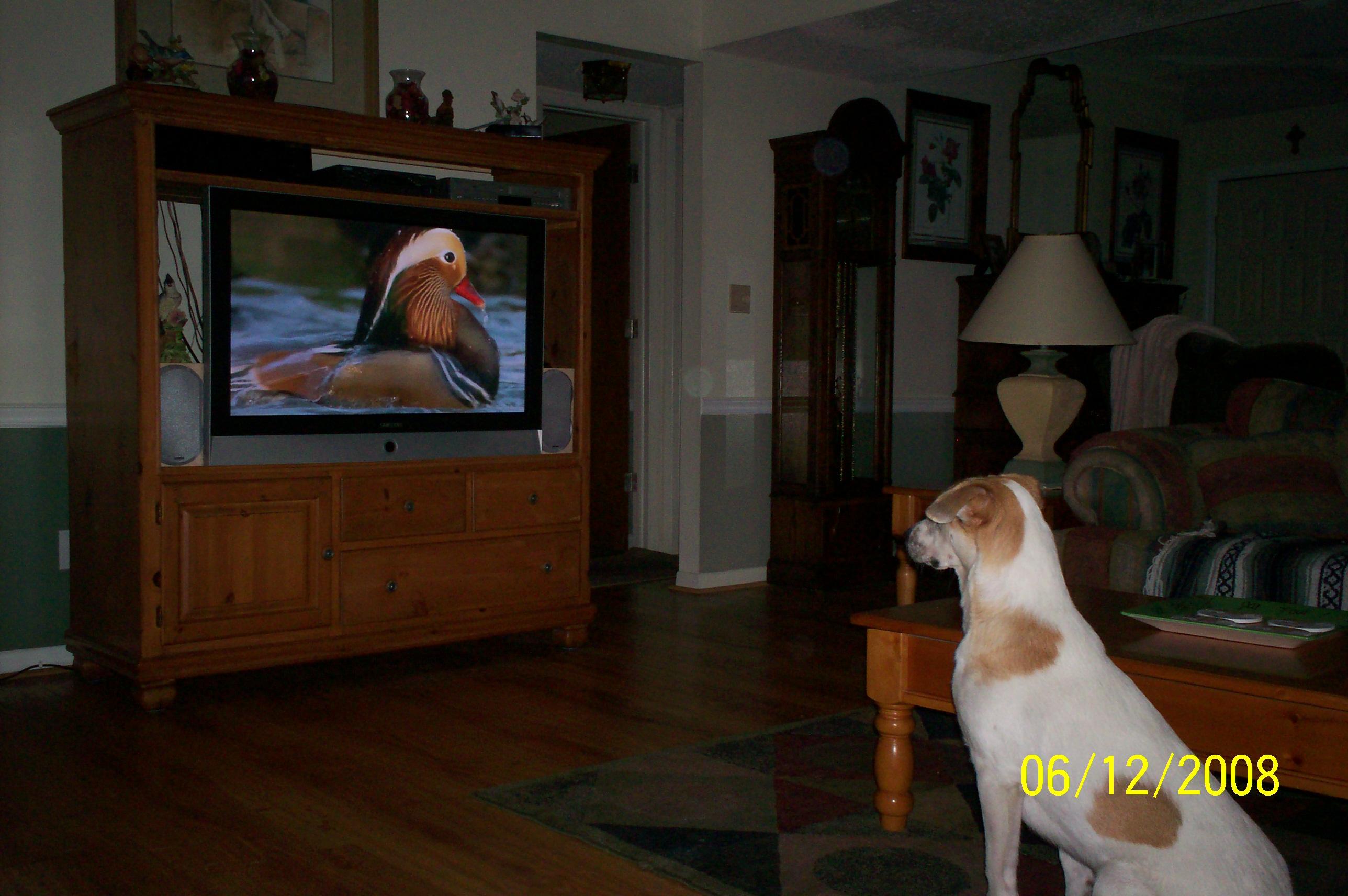 Taylove TV