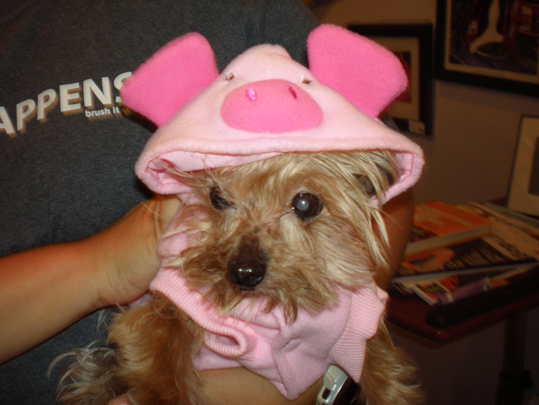 Adell Piggy