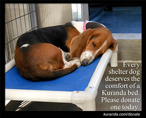 Donate a Kuranda dog bed