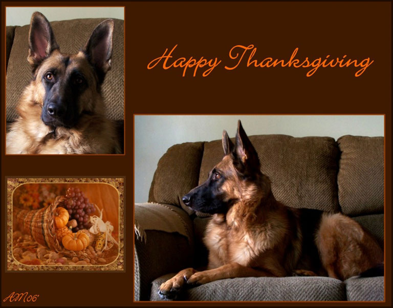 gsd_thanksgiving