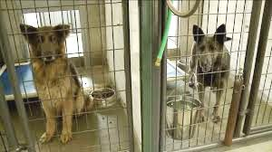EPIDEMIC - 2 dogs in shelter