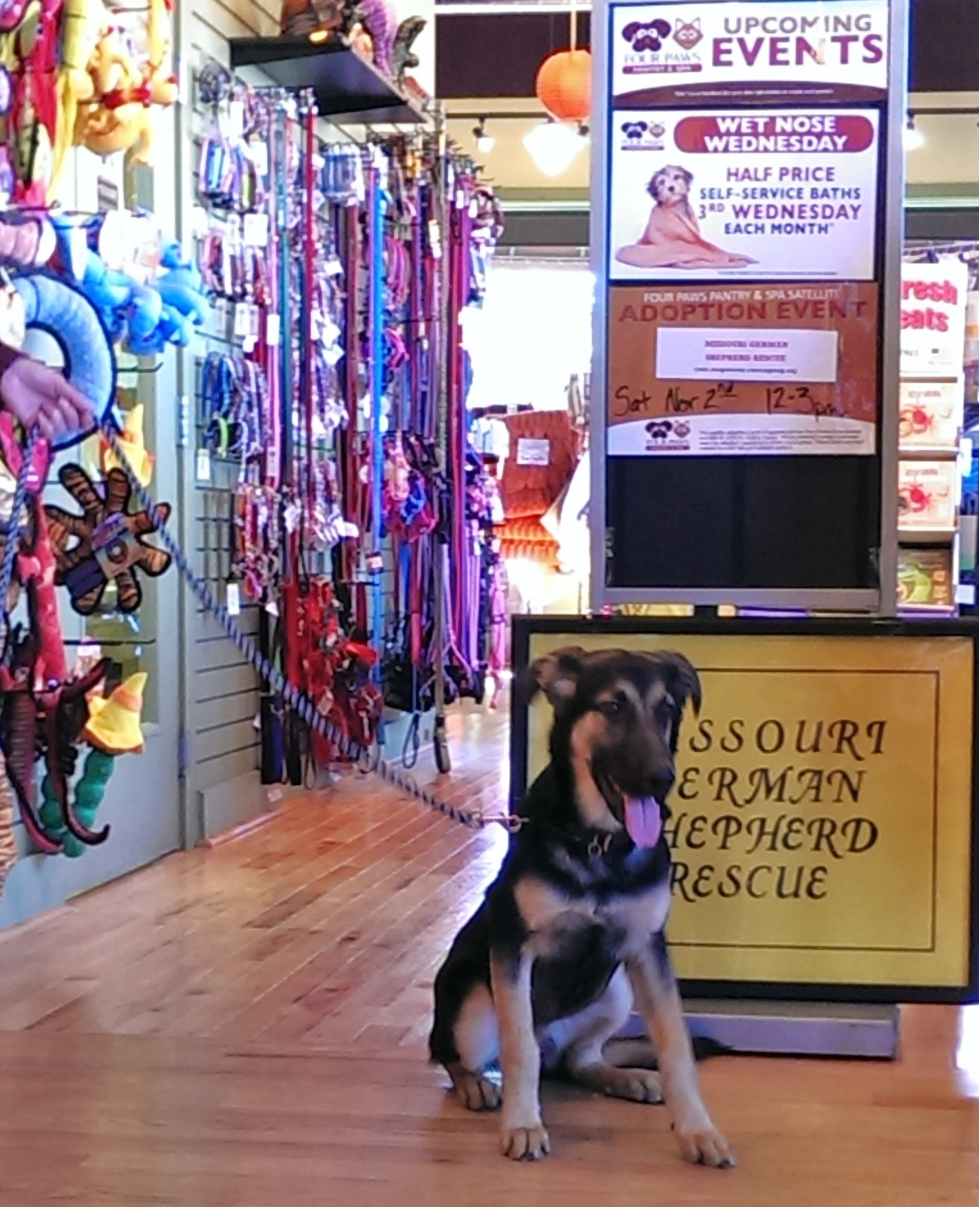 4 Paws Pantry - dog + MOGS sign