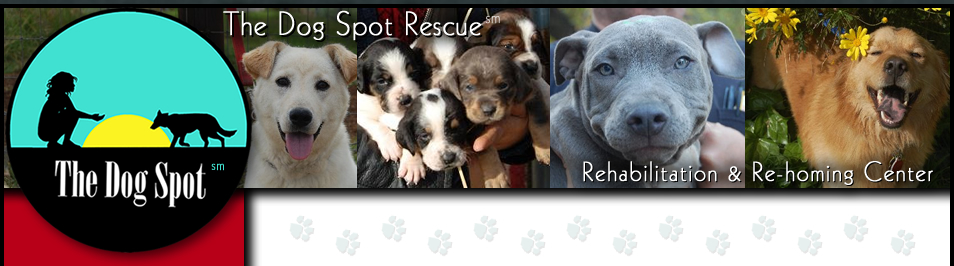 The Dog Spot Rescue
