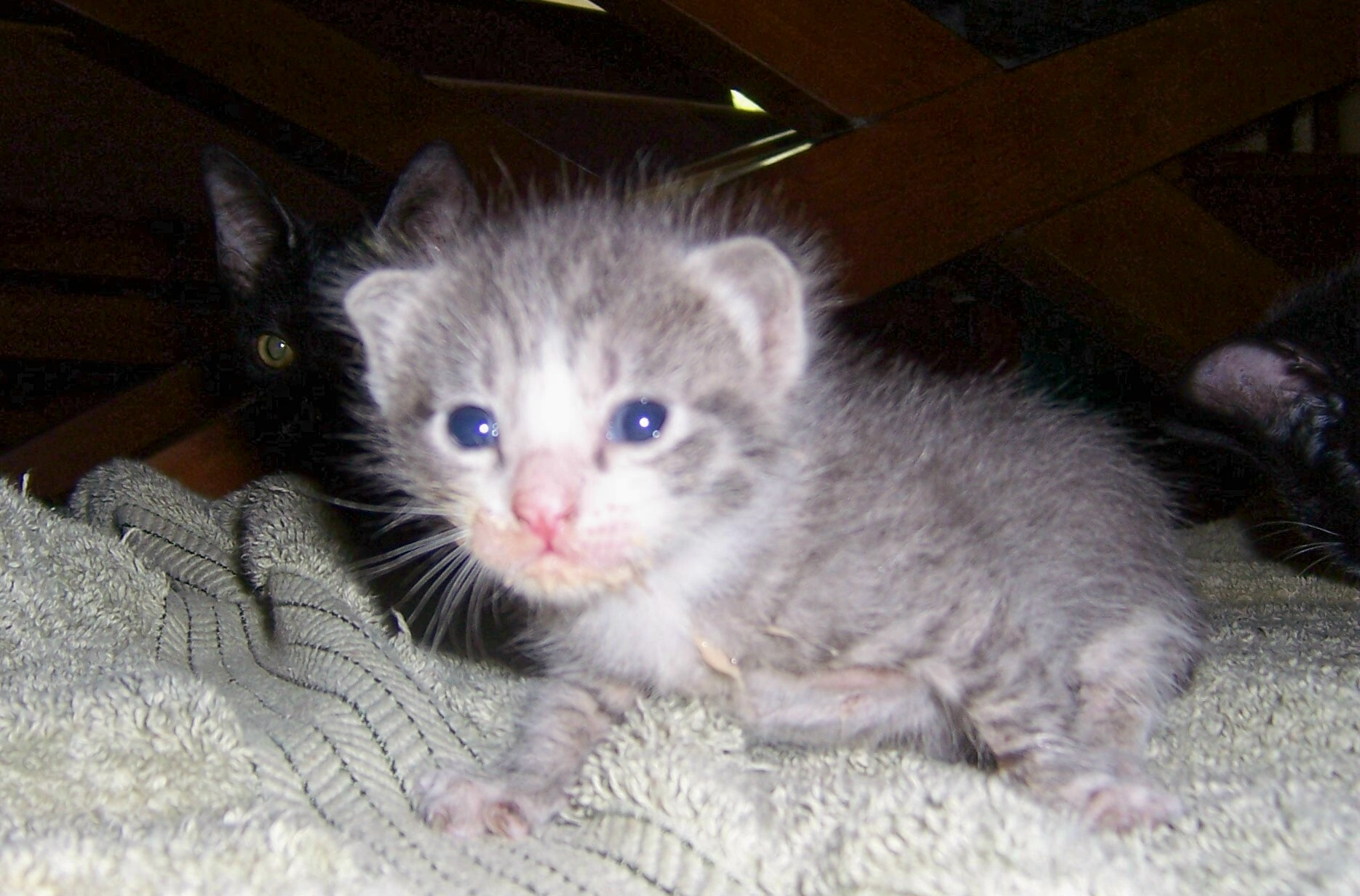 How Feral Cat Mothers Raise Kittens