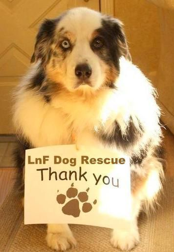 Dog-LNF-THANK YOU