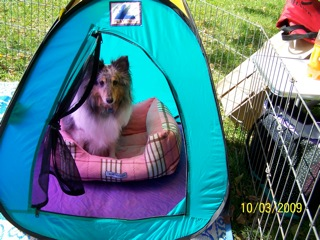 Lucy tent2