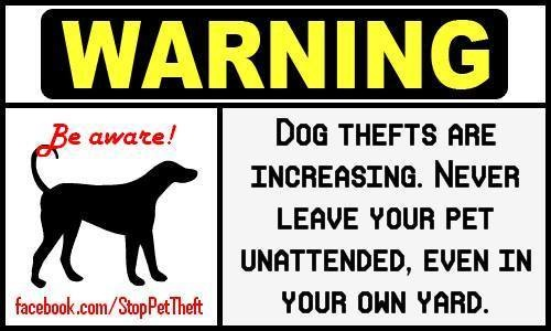 Pet thefts