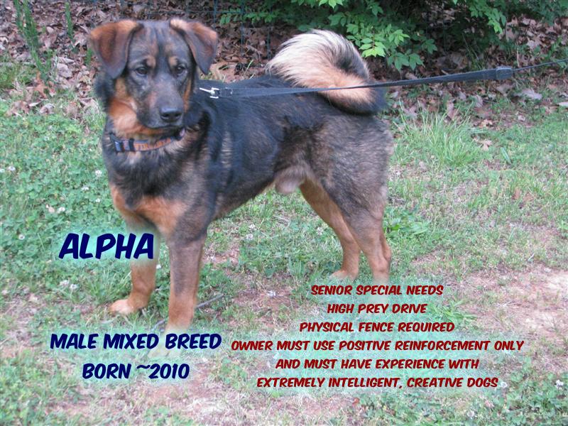 Alpha BP