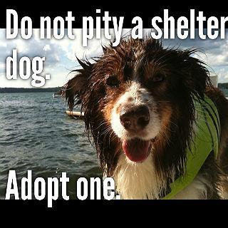 Do Not Pity A Shelter Dog