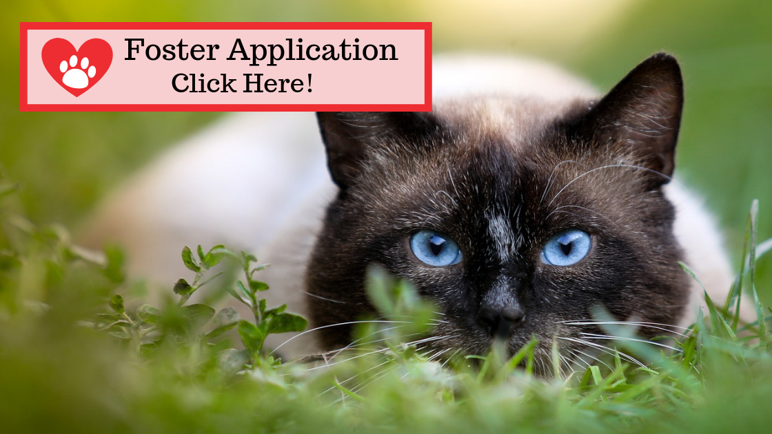 Click to Open our Foster Application