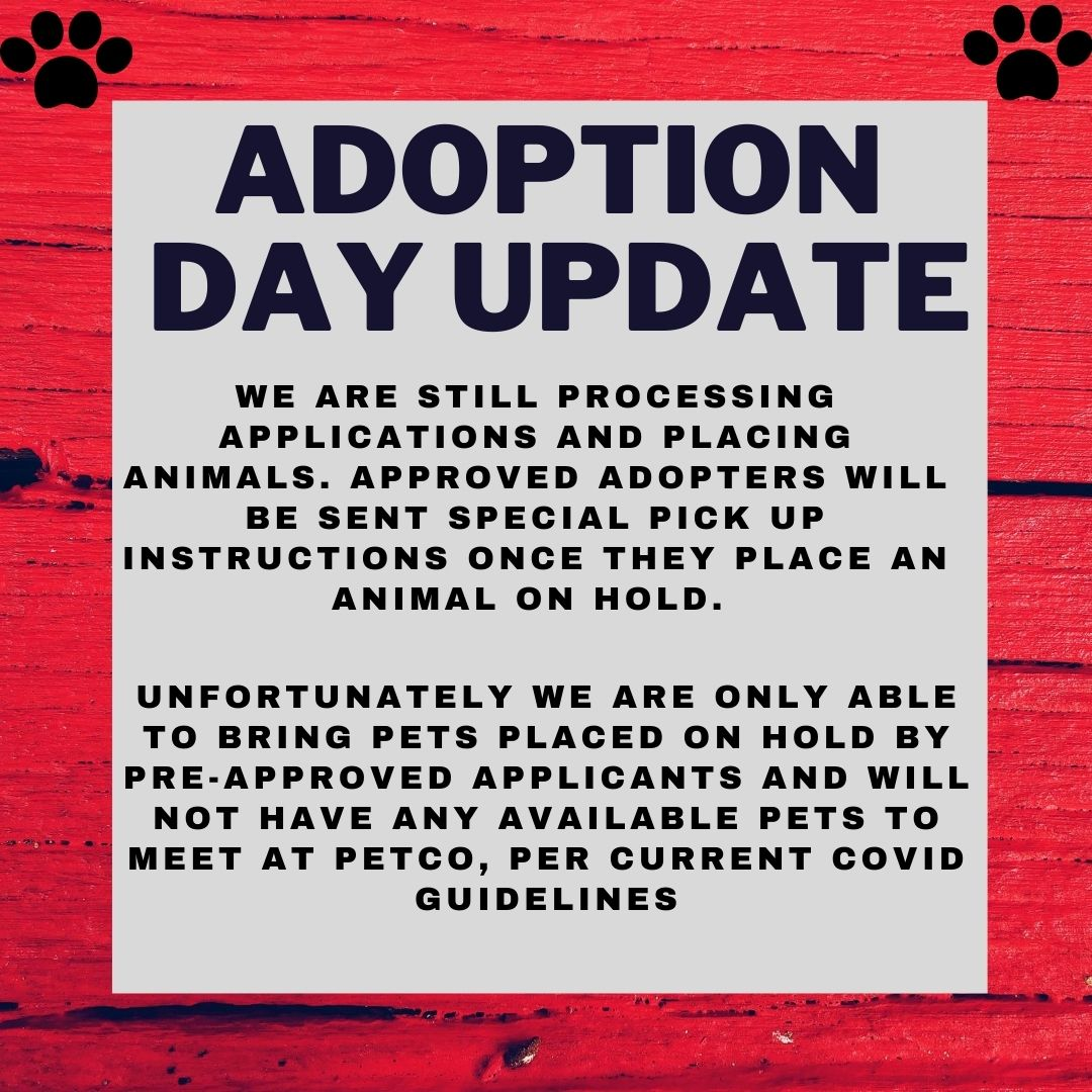 adoption update