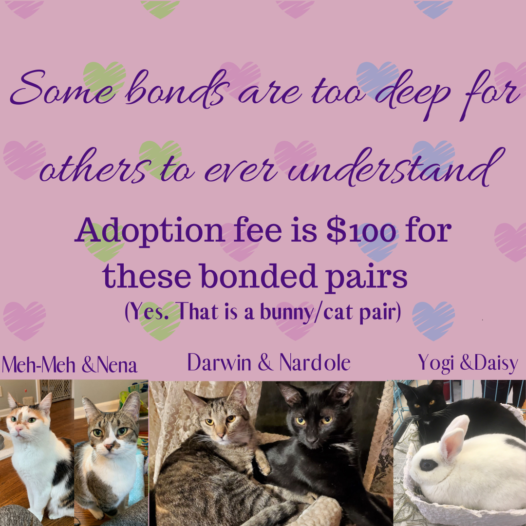 bonded cats 2020