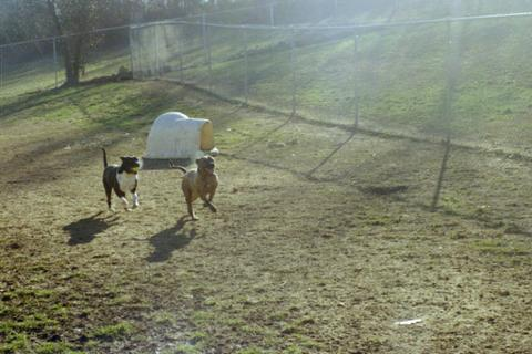 GraysonDogsPlaying
