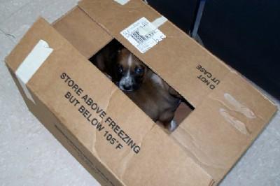 Box Pups