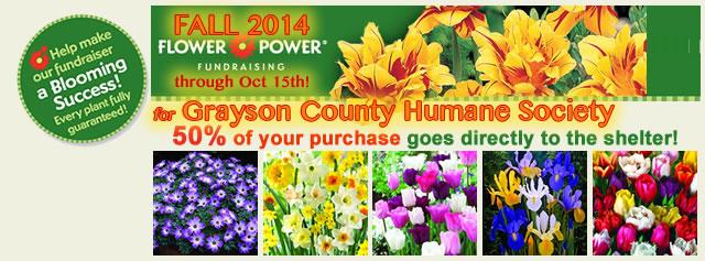 2014 Fall Flower Power Fundraiser for Grayson Shel
