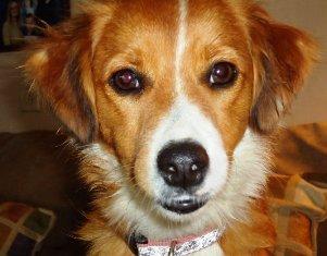 Pippi aka Sady Now