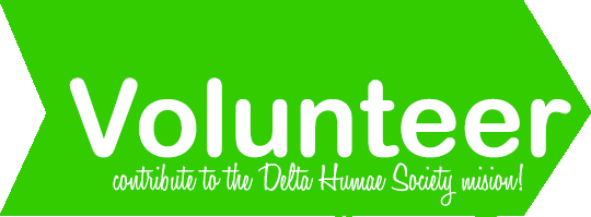 Volunteer for DHS