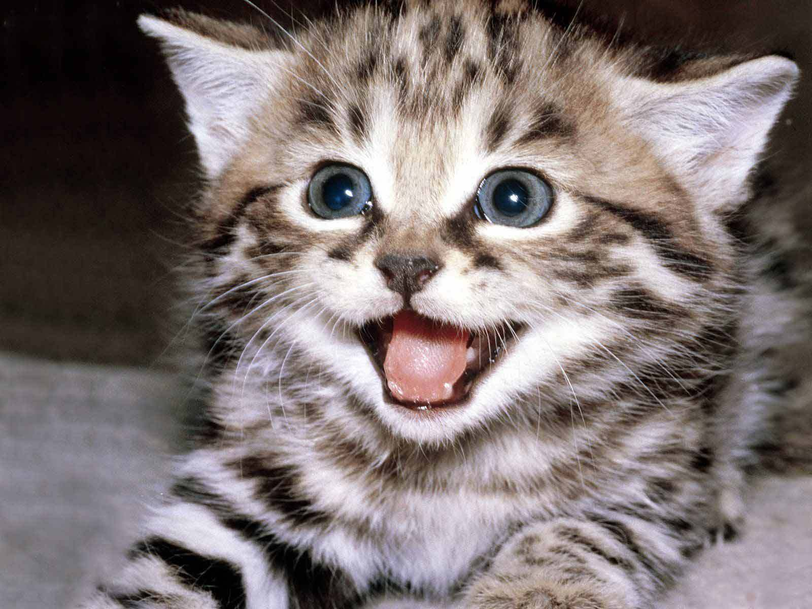 happy kitten