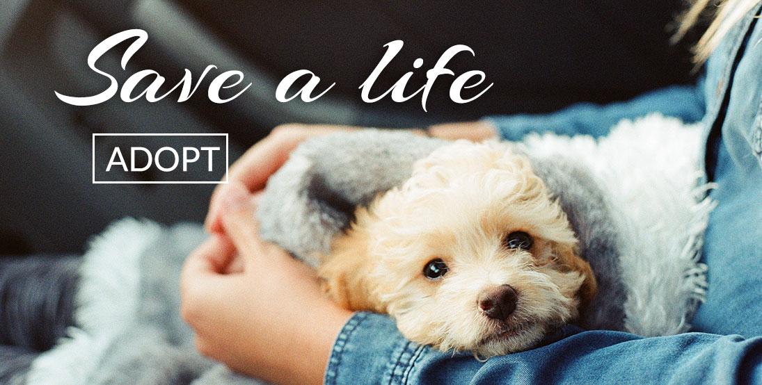 Save a Life - Adopt