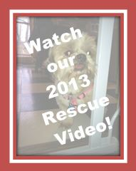 2013 Rescue Video graphic