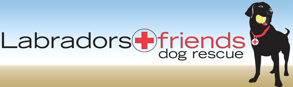 Labradors and Friends Dog Rescue Group