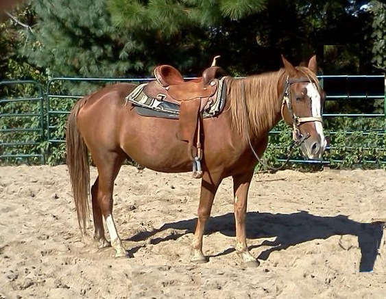 Mac w Saddle
