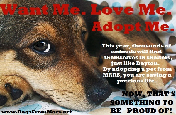 Want Me. Love Me. Adopt Me. Poster
