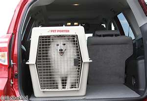 dog traveling in crate