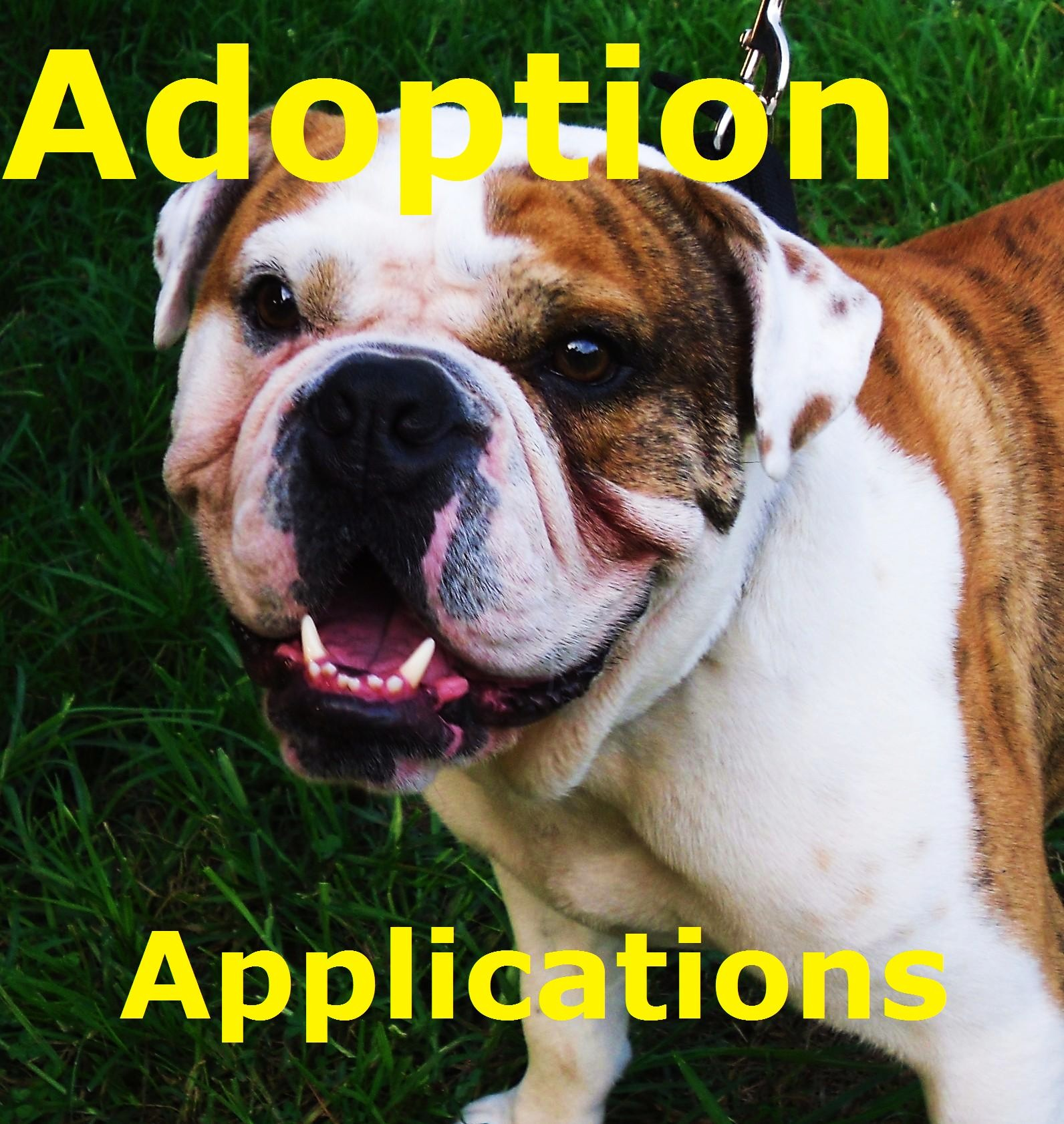 Adoption Applications Poster