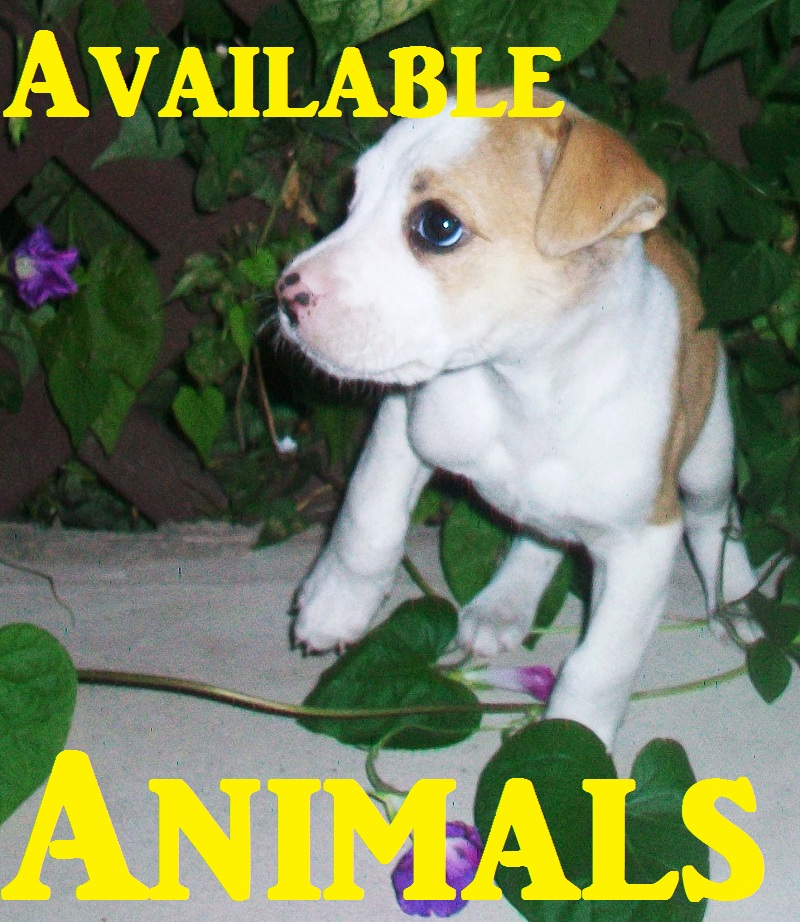 Poster-Available animals