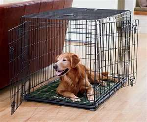 dog in crate3