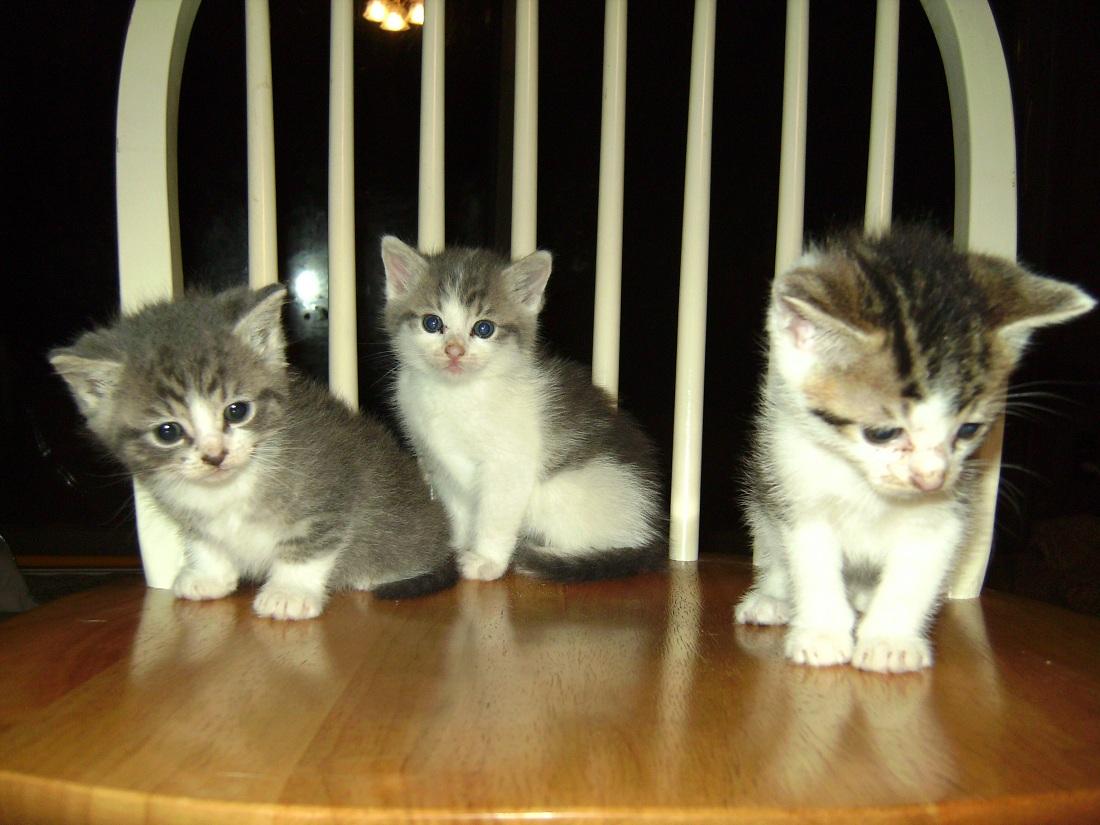 3 kittens2