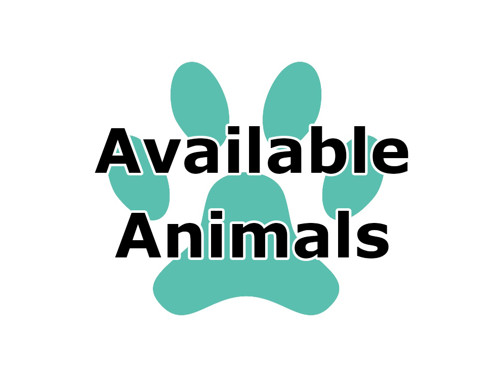 Icon - Available Animals