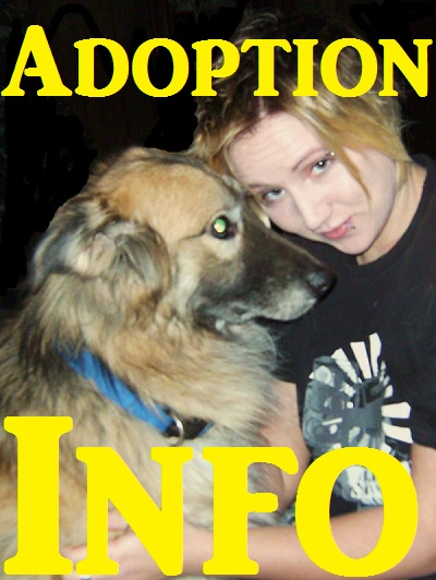 Poster- Adoption Info
