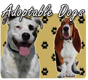 Adoptable Dogs - 300x275