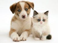 Cute Puppy & Kitten