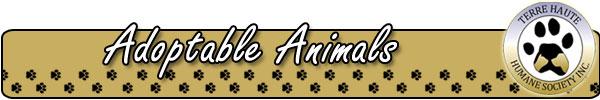Adoptable Animals