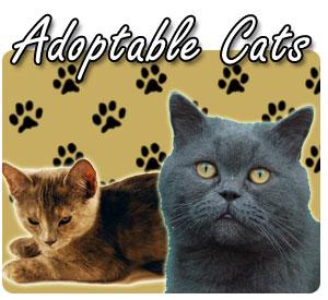 Adoptable Cats - 300x275