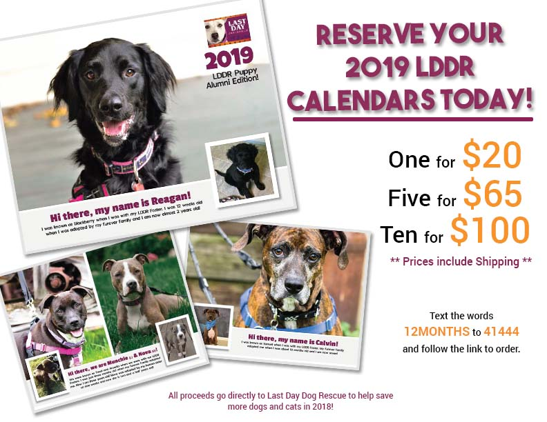 2019 Last Day Dog Rescue Calendar Click Here To Order
